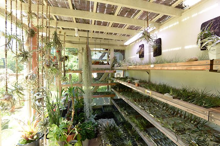 一階部分に作った温室。The Landscapersの主力商品でもあるエアプランツを管理しています。品種別に並べ、一目で植物の状態を確認できるように収納しています。