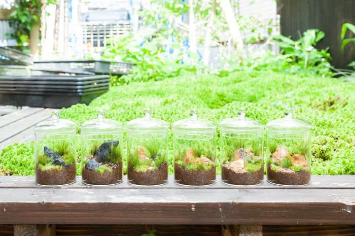 のぞき込むと、ガラスの中に小さな世界。鎌倉の苔専門店で苔テラリウムを手づくり!