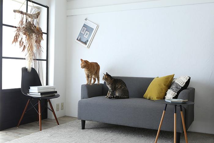 コロコロよりすごい?! 猫4匹の抜け毛もラクラクお掃除できちゃうおすすめアイテムとその収納方法