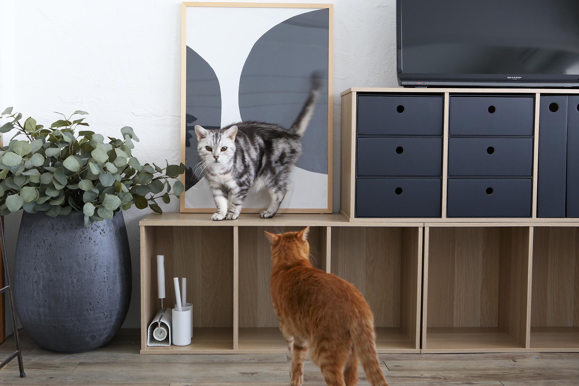 猫がいてもおしゃれな暮らしに!イタズラ防止&安心安全なインテリアや収納のアイデア