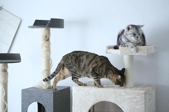 <シニア猫インテリア>長く一緒にいるために。猫の年齢に合わせた暮らしの変え方