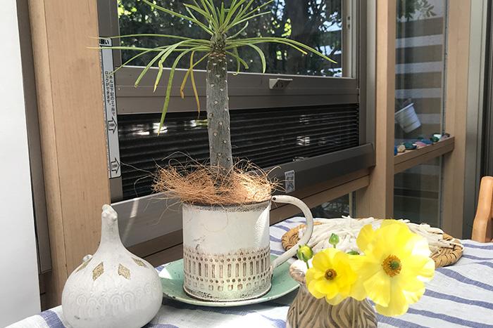 小さな植物たちがくれる、大きな幸せ