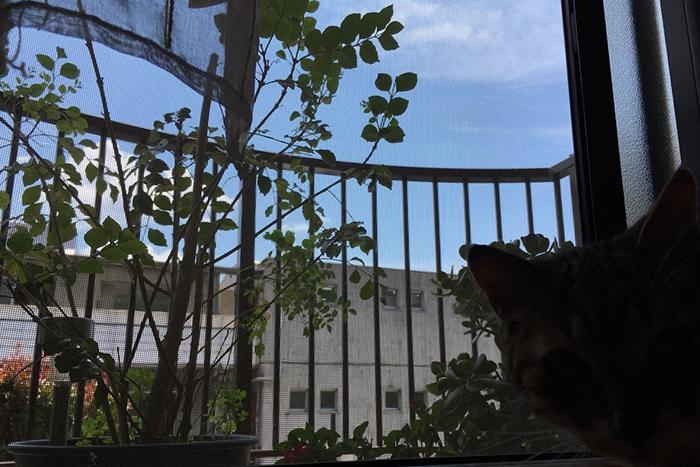 「窓」から広がる、青空のパノラマ